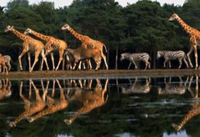 Impressie van Burgers' Zoo